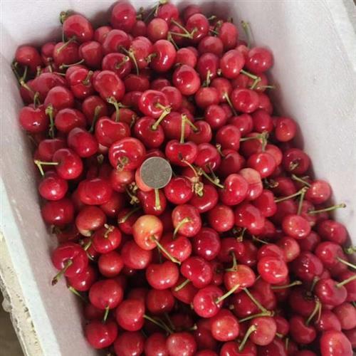 大樱桃批发厂家樱桃批发市场价格