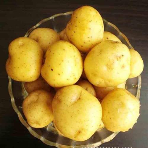 厂家长期供应优质土豆新鲜土豆绿色无公